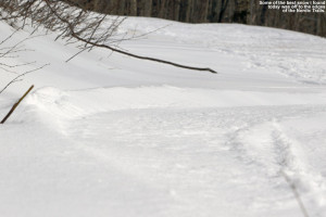 An image of a ski track in powder off to the side of a Nordic trail at Bolton Valley Ski Resort in Vermont