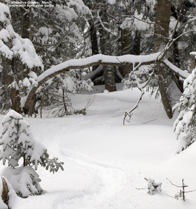 An image showing ski tracks in powder snow in the Nosedive Glades at Stowe Mountain Resort in Vermont