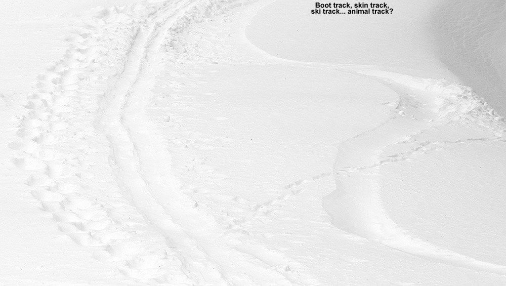 An image showing tracks from various methods of snow travel on one of the slopes at Stowe Mountain Resort in Vermont