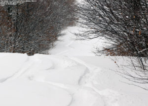 An image of ski tracks in powder on the Spell Binder trail at Bolton Valley Resort in Vermont