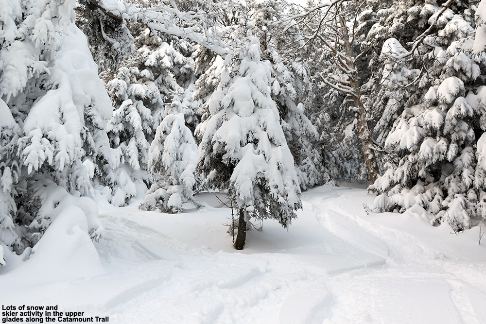 An image showing some ski tracks in powder snow in a high-elevation glade along the Catamount Trail outside of Bolton Valley Ski Resort in Vermont