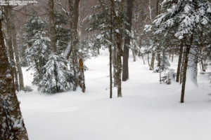 An image of the White Rabbit Glade with fresh powder at Bolton Valley Ski Resort in Vermont