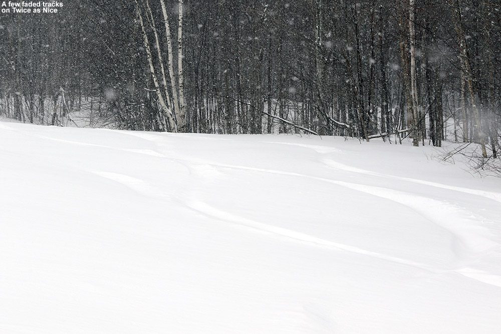 An image of ski tracks in powder on the Twice as Nice trail at Bolton Valey Ski Resort in Vermont