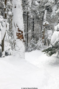 An image of the Adam's Solitude trail at Bolton Valley Ski Resort in Vermont