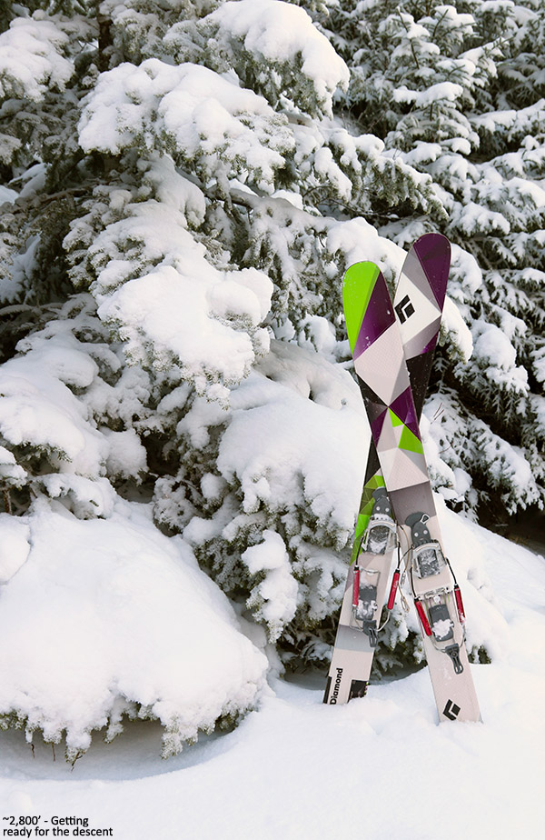 An image of fat Telemark skis in snow at Bolton Valley Resort in Vermont