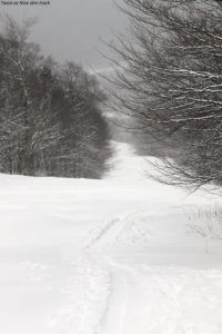 An image of a skin track for ascending on skis on the Twice as Nice trail at Bolton Valley Ski Resort in Vermont