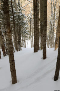 An image of the Glades Right area at Bolton Valley Ski Resort in Vermont