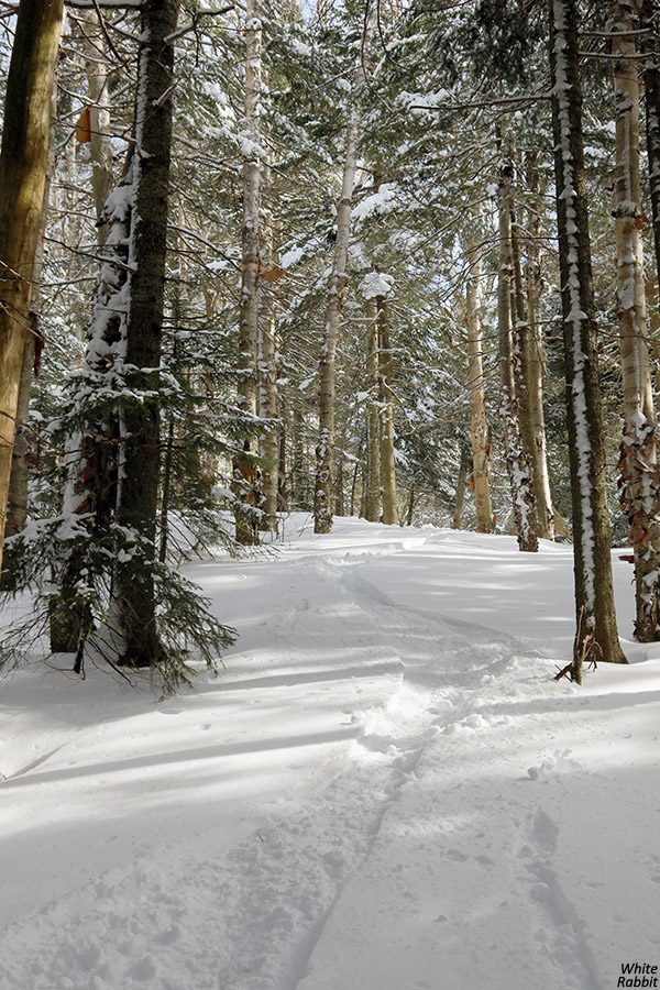 An image of the upper White Rabbit area at Bolton Valley Ski Resort in Vermont