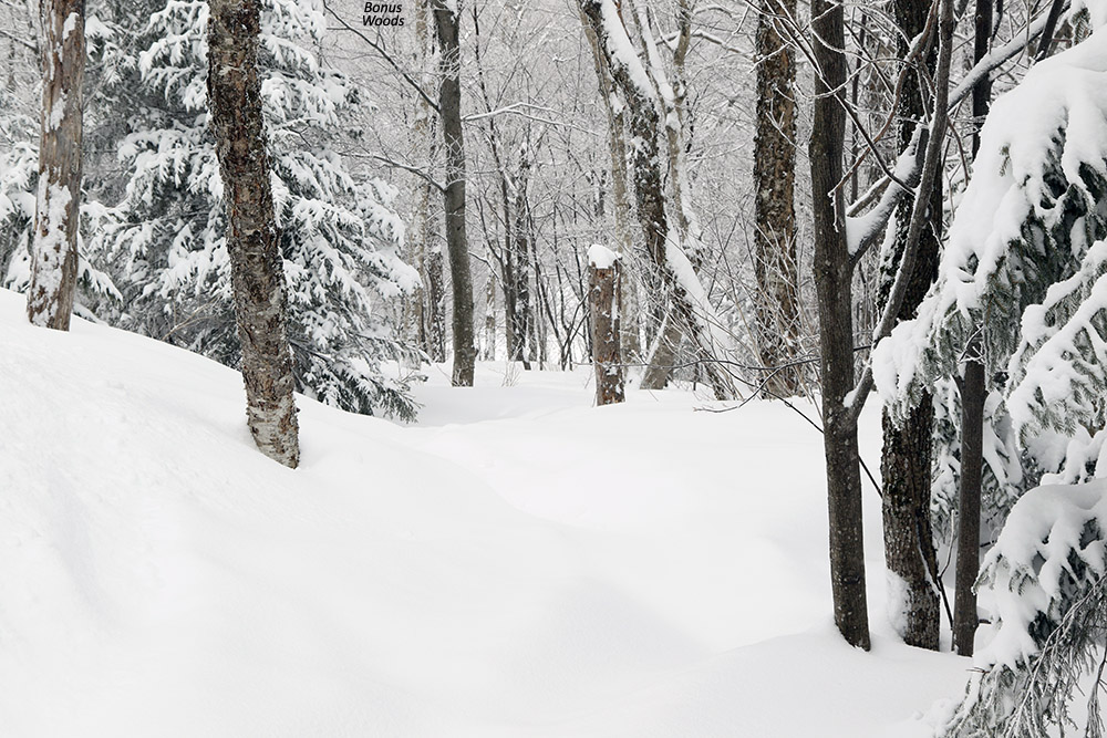 An image of the Bonus Woods area with lots of fresh powder at Bolton Valley Ski Resort in Vermont