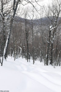 An image of one of the backcountry glades in the No Name area at Brandon Gap in Vermont
