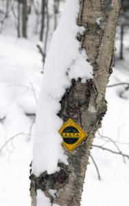 An image of a Rochester/Randolph Area Sport Trail Alliance trail marker at the Brandon Gap Backcountry Recreation Area in Vermont