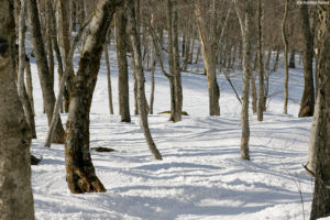 An image showing a view of the Enchanted Forest glade at Magic Mountian ski area in Vermont
