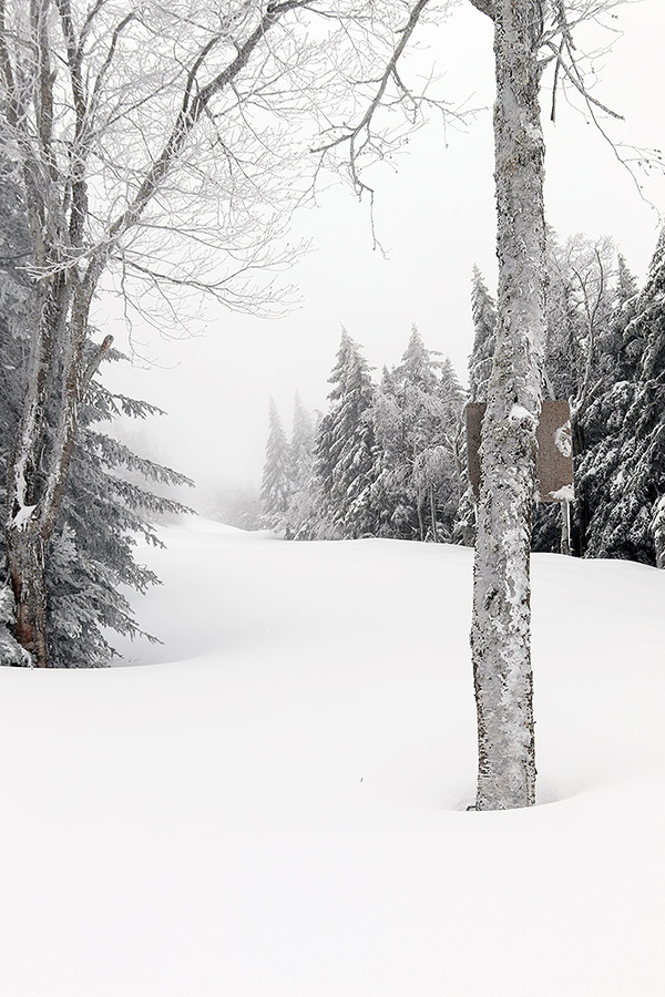 An image looking up the Alta Vista trail at Bolton Valley Resort in Vermont with a fresh coating of April powder