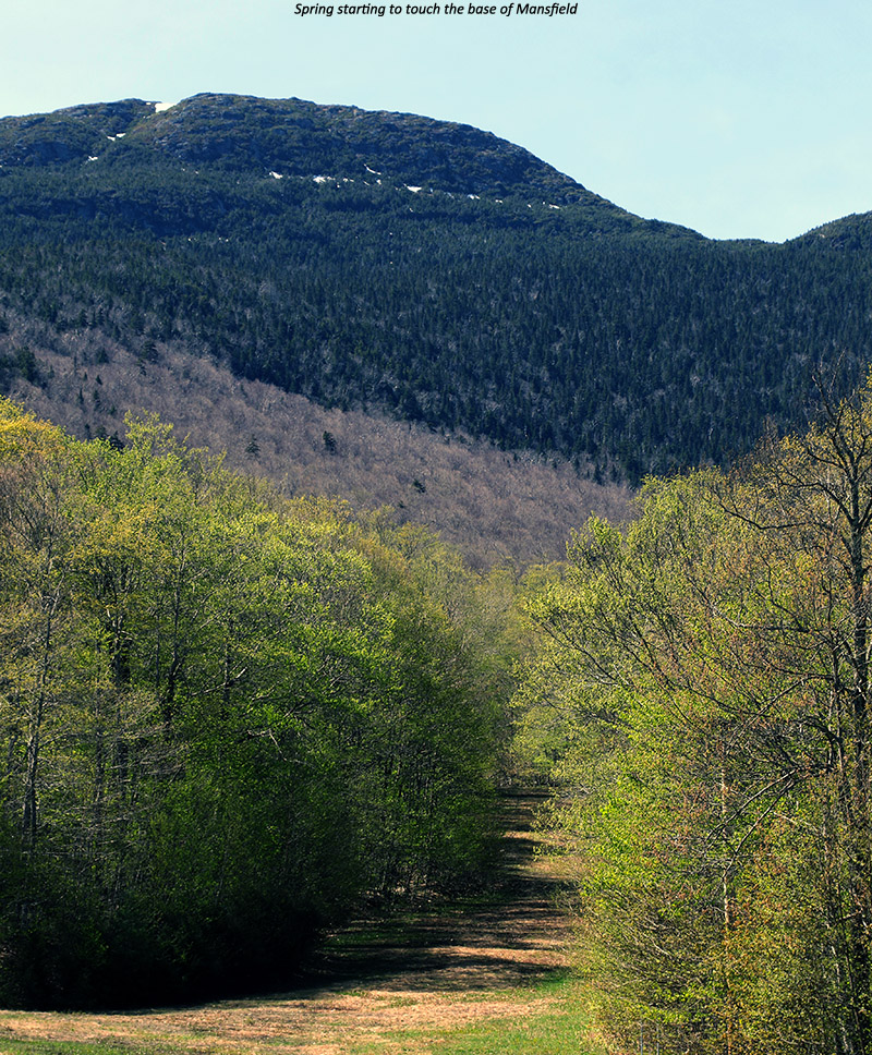 A late May image of spring slowly making its way up the slopes of Mt. Mansfield in Vermont
