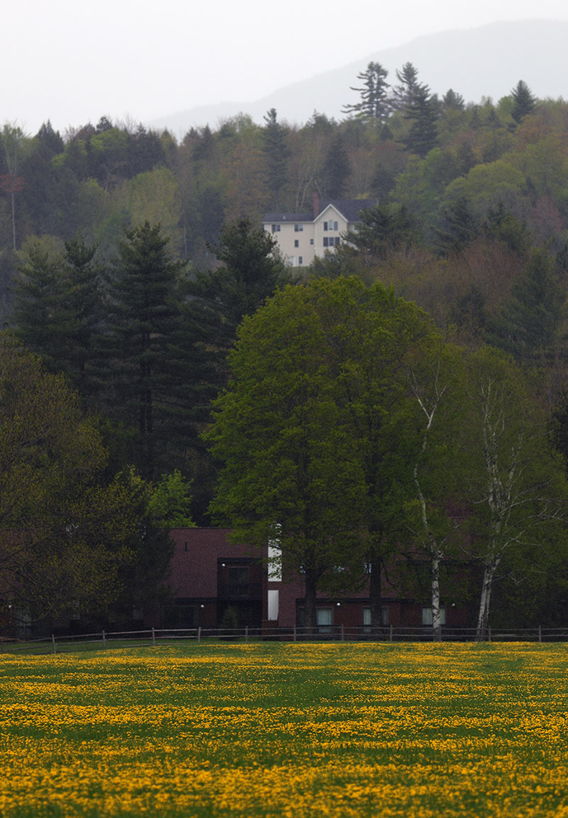 An image of spring flowers and some houses in the town of Stowe, VT in May