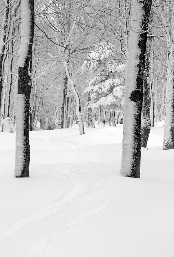 An image of a ski track in powder snow in the Wilderness Woods area at Bolton Valley Resort in Vermont