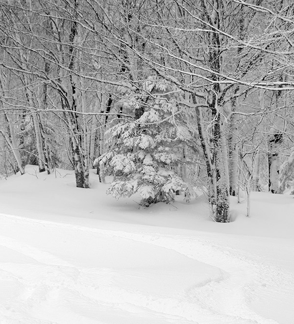 An image showing ski tracks in powder snow on the Lower Turnpike trail at Bolton Valley Resort in Vermont