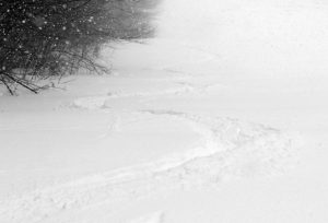 An image showing ski tracks in powder snow on the Spell Binder trail at Bolton Valley Resort in Vermont