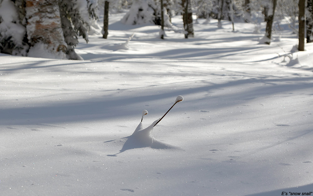 An image showing a formation in the powder snow that looks like a snail on the backcountry network at Bolton Valley Ski Resort in Vermont