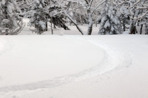 An image of ski tracks in powder snow in a glade off the Heavenly Highway trail on the backcountry network at Bolton Valley Resort in Vermont