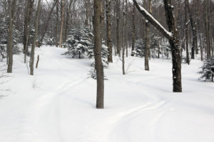 An image of a glade in the Holden's Hollow area in the backcountry near Bolton Valley Ski Resort in Vermont