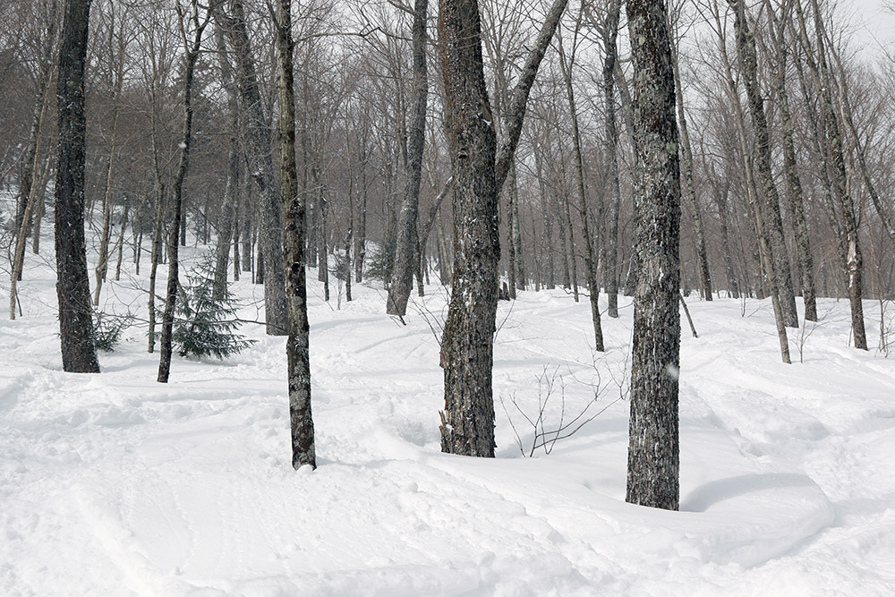 An image of ski tracks in powder snow in the Bench Woods area of Stowe Mountain Ski Resort in Vermont