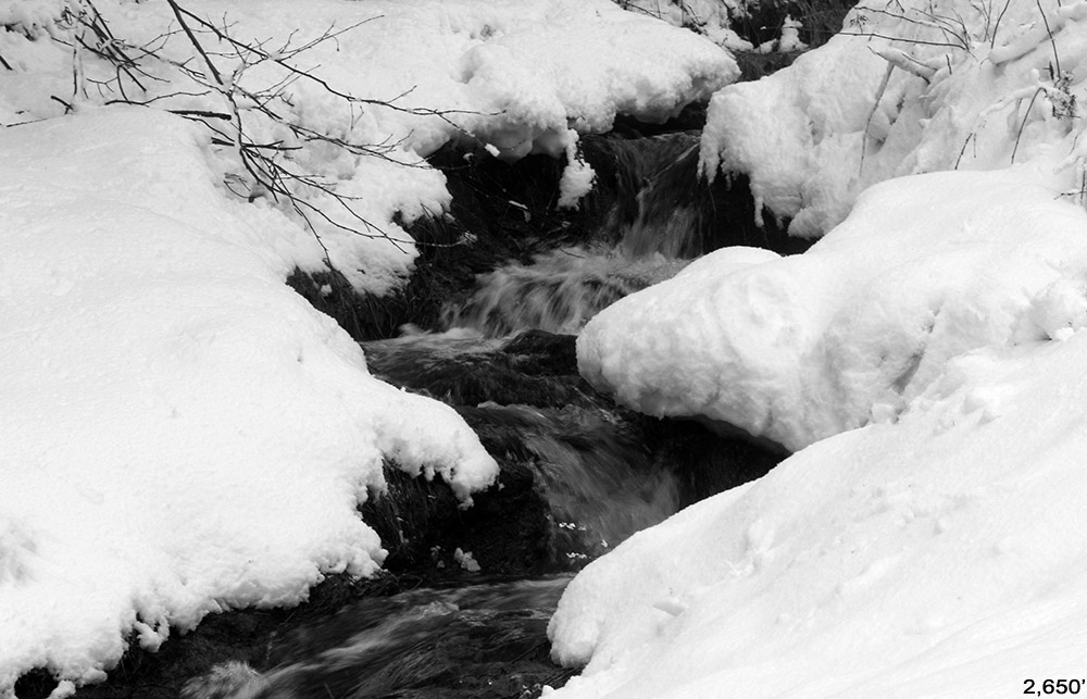 An image of a brook with fresh snow along the edges during a late April snowstorm at Bolton Valley Ski Resort in Vermont