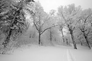 An image of snowy trees and a skin track after an early December snowfall at Bolton Valley Ski Resort in Vermont