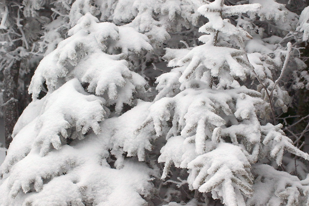 An image of trees coated with snow from Winter Storm Gage at Bolton Valley Ski Resort in Vermont