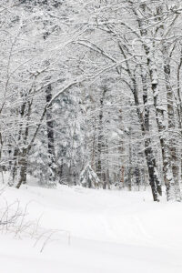 An image of the Wood's Hole area with fresh snow at Bolton Valley Ski Resort in Vermont