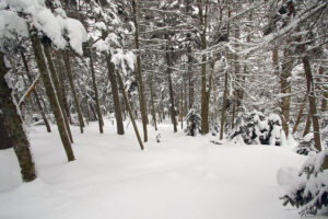 An image of the C Bear Wood area in the backcountry at Bolton Valley Resort in Vermont