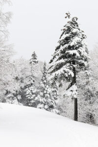 An image of snow on the trees during a late-April snowstorm at Bolton Valley Ski Resort in Vermont