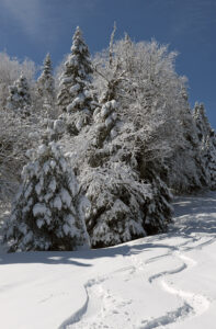 An image of ski tracks in powder snow after a mid-May snowstorm at Bolton Valley Ski Resort in Vermont