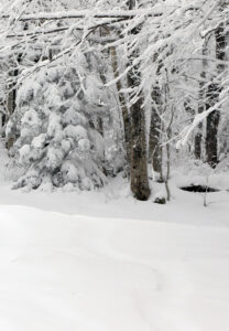 An image of fresh snow with some buried ski tracks from a small December snowstorm at Bolton Valley Ski Resort in Vermont