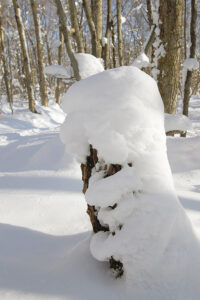 An image of snow covering a stump in the Nordic & Backcountry Network at Bolton Valley Ski Resort in Vermont