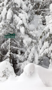 An image of snowy evergreens and ski trail signs at the Timberline Summit area at Bolton Valley Ski Resort in Vermont