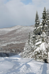 An image of ski tracks on a powder morning after Winter Storm Peggy on the Spell Binder trails at Bolton Valley Ski Resort in Vermont