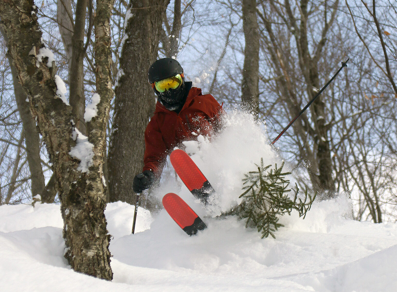 Dylan skiing powder by a small evergreen tree in the Doug's Solitude area of Bolton Valley Resort in Vermont