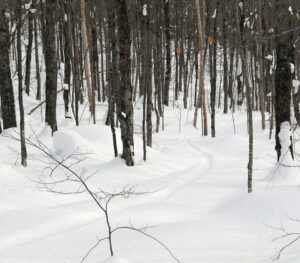 An image of an old ski track in the powder near the Buchanan Shelter on the Nordic and Backcountry trail Network at Bolton Valley Resort in Vermont