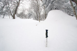 An image of a ski slope in the Jay Peak backcountry of Vermont with a ski measurement pole showing a snow depth of nearly 40 inches
