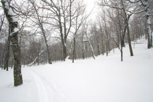 An image of some of the glades in Big Jay Basin the Jay Peak backcountry of Vermont