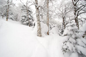 An image of deep powder snow on the steep slopes of Big Jay in the Jay Peak area backcountry of Vermont