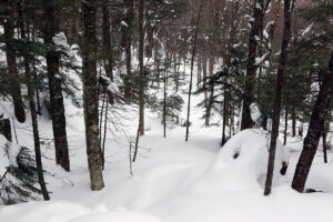 An image of sidecountry terrain with powder near Bolton Valley Ski Resort in Vermont
