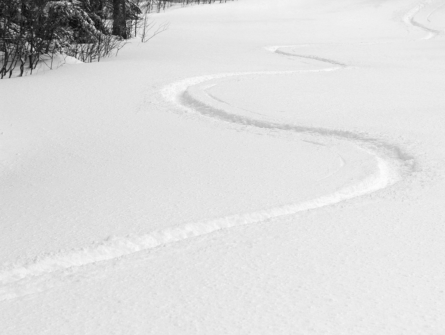 An image of ski tracks in powder after an April snowstorm in the Wilderness terrain area at Bolton Valley Ski Resort in Vermont