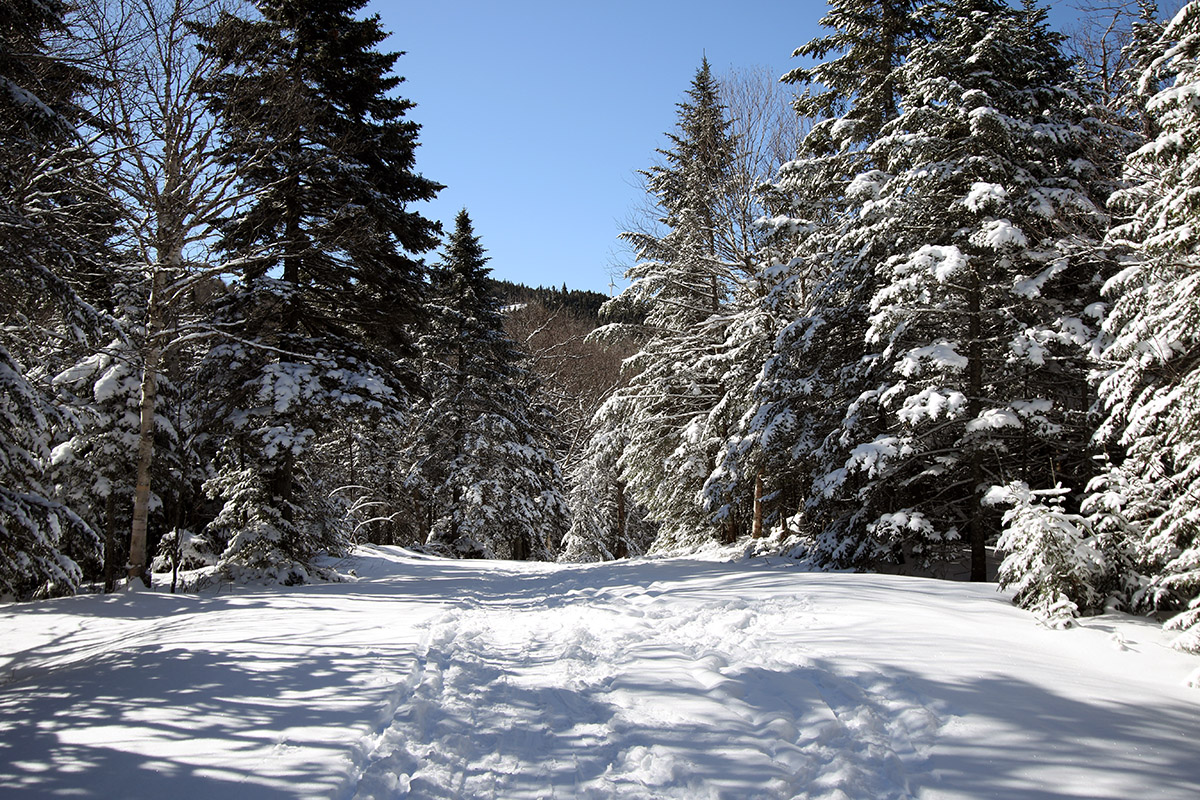 An image of the Vista Peak area of Bolton Valley Resort after an April snowstorm