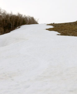 An image of late-season snow left over from snowmaking on the Main Street Trail in the Spruce Peak area of Stowe Mountain Ski Resort